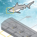 Image - FUTEK mini load cells take on Shark Week