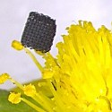 Image - Researchers develop novel process to 3D print graphene -- one of the strongest materials on Earth