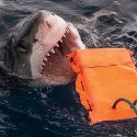 Image - New shark-resistant wetsuit material could help save lives